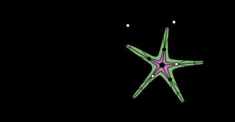 Starfish Organic